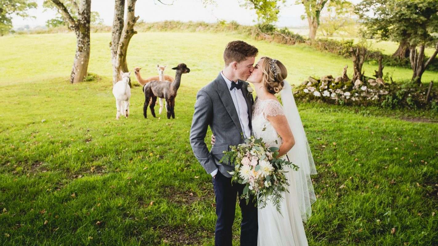 Cardiff wedding photographers capturing bride and groom including wedding alpacas
